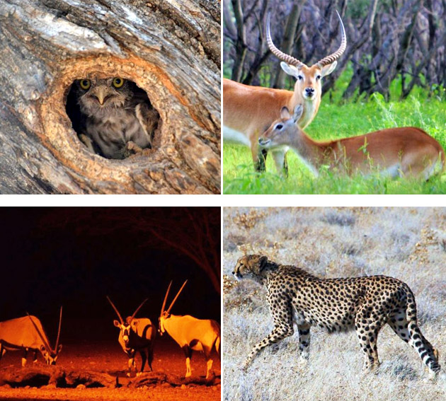 ohange lodge, ohange, bush camping, otavi, namibia game lodges, namibia, otavi game drives, self catering, camping facilities, mountain huts